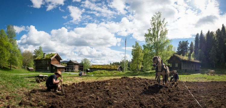 Farming the old way at West-Telemark museum, Skodde studio
